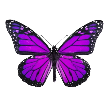 http://www.animal.blog02.com/wp-content/uploads/2014/10/small-purple-butterfly.jpg